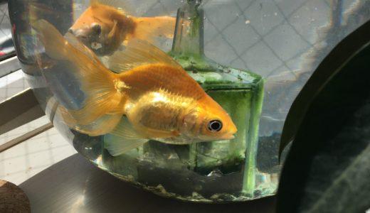 睡眠不足と金魚の水槽の話